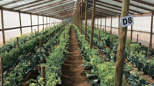 Antufen – VR Plantaciones